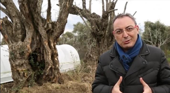 2 Bin Yaşındaki Zeytin Ağacı