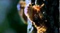 Ağustos Böceklerinin 17 Yıllık Uykusu