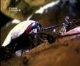 Böcek Savaşları