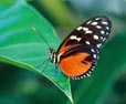 Kelebeğin Doğuşu