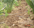 Toprak Altı Zararlılarla Mücadele